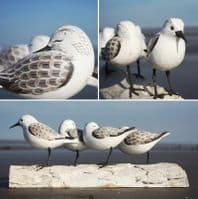 Sanderling Bird Carving | Hand Carved Birds | Wooden Bird Carving